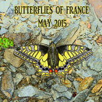 Butterflies of France May 2015