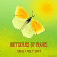 Butterflies of France  June/July 2017